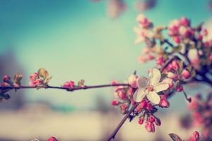spring_comp